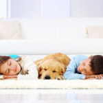 Pet Odor removal Oklahoma City